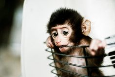 monkeypuppy!