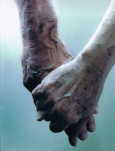 Aging Together