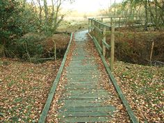 love how the color blends with the landscape Wooden Walkways, Color Blending, Nature Reserve, Garden Planters, Garden Inspiration, Backyard Ideas, Railroad Tracks, Outdoor Spaces, Paths