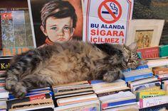 Cats in Photography: istanbul ve kedileri...