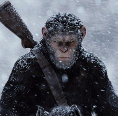 Download War for the Planet of the Apes 2017 Full Movie online for free in 720p hd bluray to watch at home