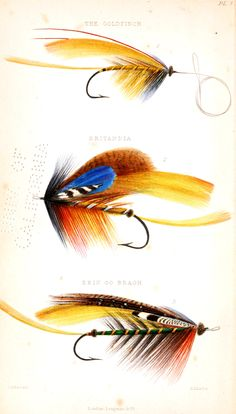 Design - Objects - Salmon flys for fly fishing - blue yellow
