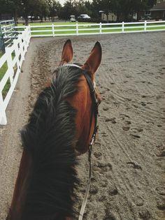 (32) Tumblr Cute Horses, Horse Love, Beautiful Horses, Horse Ears, Horse Drawings, Show Jumping, Horse Pictures, Horse Riding, Horseback Riding