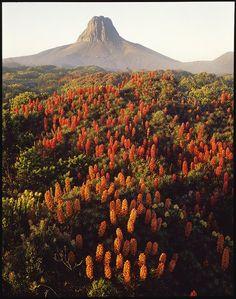 Peter Dombrovskis - A Wild Vision – Wild Island Tasmania