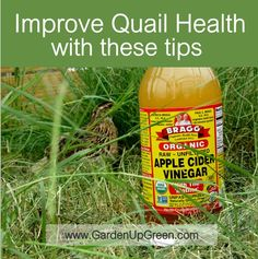 Improve Quail health with these tips