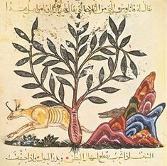 Botany, Herbals and Healing In Islamic Science and Medicine | Muslim Heritage