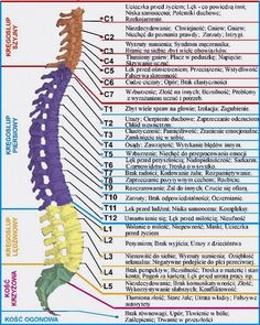 … co mówią dolegliwości kręgosłupa … Health Diet, Health Fitness, Spine Health, Autism Parenting, Good Habits, Health Advice, Alternative Medicine, Physical Therapy, Natural Medicine