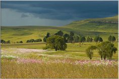 Before The Storm - Harrismith, Free State Free State, The Great Escape, Cool Art Drawings, African Countries, Landscape Paintings, Oil Paintings, Nature Photos, Wonders Of The World, South Africa