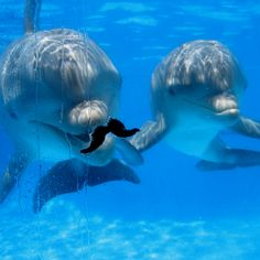 Baby dolphins :)  These boys are the loves of my life!