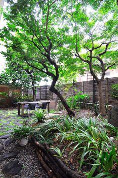 右がモミジで左がウメ、奥にハクモクレンの木。奥さんは「この庭は緑がすごく多い感じがして、それがいい」と言う。