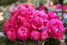 Mayfair Flower Show at Sketch London - Margarita Karenko Photography Professional Portrait, Flower Show, Blossom Flower, Lifestyle Photography, Margarita, Sketch, London, Rose, Floral