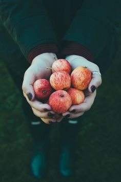 Apple picking party to celebrate the start of the fall, by Molly Yeh Autumn Day, Autumn Leaves, Winter, Autumn Aesthetic, Fall Is Here, Best Seasons, Tumblr, Autumn Inspiration, Fall Halloween