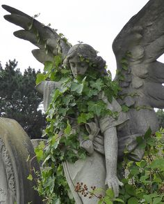 """cinnamonappledoughnuts: """"[ID: A statue of an angel in a cemetery. Ivy grows on the angel. Bar Kunst, Decoration Photo, Slytherin Aesthetic, Nature Aesthetic, Skull Design, 3d Design, Pretty Pictures, Aesthetic Pictures, Aesthetic Wallpapers"""
