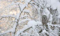 Concurso dos melhores fotógrafos alemães de natureza. 'Taiga Spirit' conquista 4º lugar na categoria 'Pássaros'.