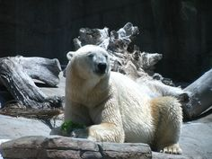 Mon ami l'ours au Zoo de San Diego