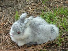 Furry Plush Animal EASTER BUNNY RABBIT