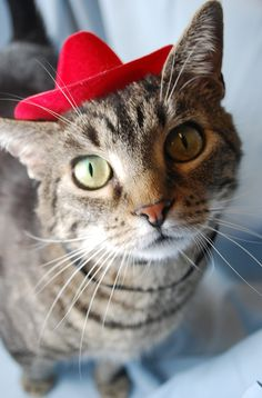 31 Best Cute Cats in Hats images