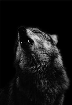 crying out. make a sound. who will hear you but the trees and the ground?  beautiful wolf picture #howl