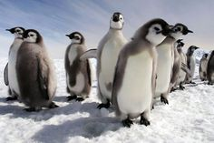 Penguins: Spy in the Huddle Season 1 (2016)Penguins are the best dressed animals in the kingdom, because they're always in black and white. National Geographic sent some photographers to document these dapper animals.Arriving November 23 #refinery29 http://www.refinery29.com/2016/10/127066/netflix-new-releases-november-2016#slide-62
