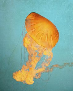 Jellyfish Print Beach Decor Nature by AllysonBrownPhoto on Etsy