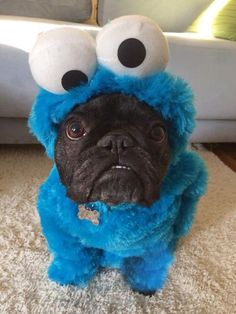 """This seemed like a good idea at first, now I just don't know "", French Bulldog in Cookie Monster Costume."