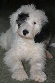 I will get this precious dog!