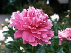 What kind of flower are you? I got a Poesy, I am beautiful inside and out and you are positive. I like the flower but not the color, pink ain't really my thing :p