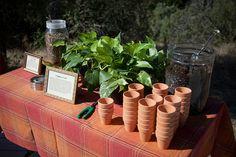 pot your own plant favors
