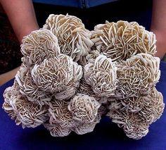 huge desert rose selenite crystal cluster.  credit: crystalminer_minerals  Amazing Geologist