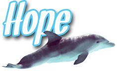 Winter and other dolphins go and see the sequel to dolphin tale