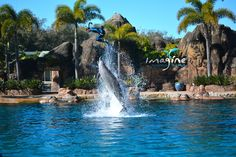 sea world <3 Orlando,FL miss going there