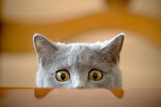 Kedilerden Öğrenebileceğimiz 13 Hayat Dersi