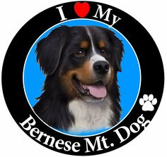 I Love My Bernese Mt Dog Car Magnet With Realistic Looking Bernese Mt Dog Photograph In The Center Covered In UV Gloss For Weather and Fading Protection Circle Shaped Magnet Measures 5.25 Inches Diameter *** Want to know more, click on the image. (This is an affiliate link)