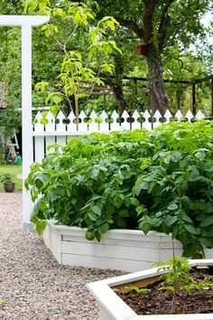White raised beds, white fence and peat rock