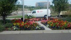Lyndale Plant Services uses many types of annuals to grow beautiful gardens at your workplace.