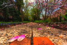Magnolia Petals. #architecture #columbus #ohio www.andyspessard.com © 2014 Andy Spessard Photography