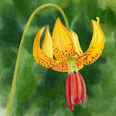 Tiger Painting - Tiger Lily Blossom With Background by Sharon Freeman