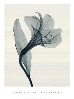 xray flower tattoo - Google zoeken