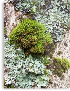 """Mossy Loveliness"" Metal Prints by Jennifer J Watson Framed Prints, Canvas Prints, Art Prints, Abstract Photos, Round Corner, Art Boards, Decorative Throw Pillows, Photographs, Wall Art"