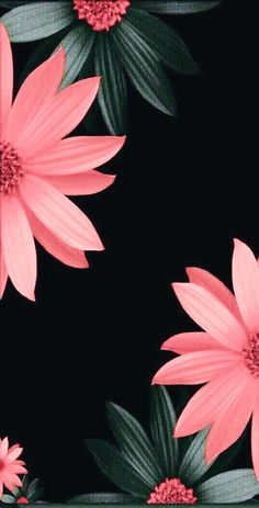 Get the Latest of Black Wallpaper Flower for iPhone 11 Today from Uploaded by user Black Wallpaper Flower Floral wallpaper Wallpaper Flower, Pink Wallpaper Iphone, Trendy Wallpaper, Flower Backgrounds, Cellphone Wallpaper, Lock Screen Wallpaper, Phone Backgrounds, Wallpaper Backgrounds, Desktop Wallpapers