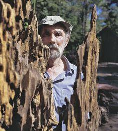 le « Portrait d'un artiste militant » : Frans_arbre ©Frans Krajcberg