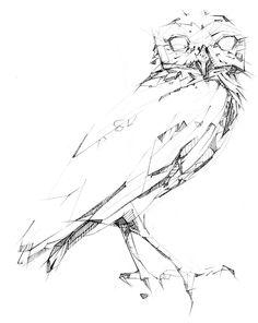 owl sketch by @jasonthielke
