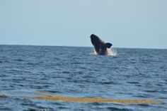 Best Places to Whale Watch in New England | Great Places to Travel - Things To Do - Best Places to Vacation