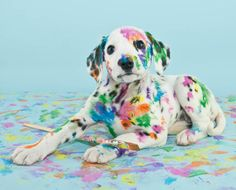 11 Spotted Facts About Dalmatians