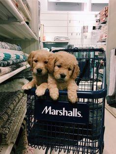 p i n t e r e s t: ✰ casey elizabeth ✰ - Cute dogs - Perros Cute Little Animals, Cute Funny Animals, Funny Dogs, Little Dogs, Cute Dogs And Puppies, I Love Dogs, Doggies, Doggie Beds, Puppies Puppies