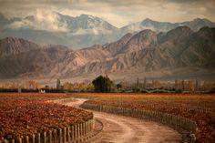 Viñedos en Mendoza, Argentina / Vineyards in Mendoza, Argentina   To learn more about #Mendoza click here: http://www.greatwinecapitals.com/capitals/mendoza
