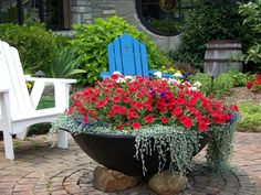 red petunias and dichondra