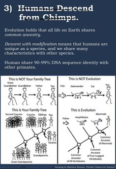 This infographic breaks down the top five misconceptions about evolution. Share with all your creationist friends.