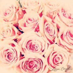 pink roses #flowers