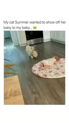 Super Cute Animals, Cute Little Animals, Cute Funny Animals, Funny Cute, Cute Animal Videos, Cute Animal Pictures, Cute Baby Cats, Cute Babies, Happy Animals